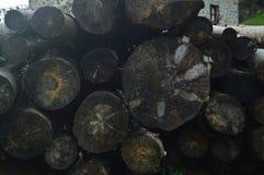 与新近地被切开的树干山的美丽的照片明信片湿由在Gorbeia自然公园雄伟地安置的雨  树Na 库存照片