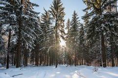 与新鲜的干净的雪、太阳和圣诞树的冬天风景 免版税库存图片