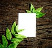 与新鲜的春天绿色叶子的白色白纸板料毗邻fr 免版税库存照片