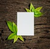 与新鲜的春天绿色叶子的白色白纸板料毗邻fr 免版税库存图片