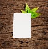 与新鲜的春天绿色叶子的白色白纸板料毗邻fr 库存图片