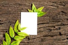 与新鲜的春天绿色叶子的白色白纸板料毗邻fr 库存照片