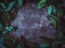 与新鲜的月桂属的平的位置背景在黑难看的东西背景离开 免版税图库摄影