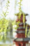 与新鲜的杨柳叶子和塔的春天东方背景 免版税库存图片