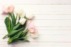 与新鲜的桃红色和白色郁金香的背景开花 免版税库存照片