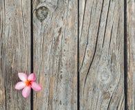 与新鲜的桃红色羽毛或Templetree花的木纹理背景 库存照片