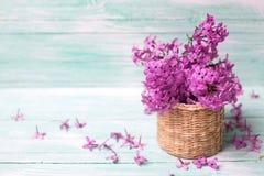 与新鲜的紫罗兰色淡紫色花的背景在被绘的绿松石 免版税库存照片