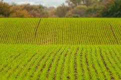 与新鲜的绿色发芽植物和选择聚焦的被耕种的土壤 库存图片