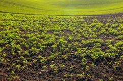 与新鲜的绿色发芽植物和选择聚焦的被耕种的土壤 图库摄影