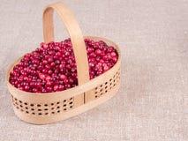 与新鲜的蔓越桔特写镜头的篮子 秋天莓果 免版税库存图片