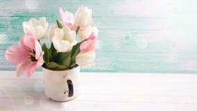 与新鲜的郁金香和水仙花的背景 库存照片