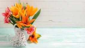 与新鲜的郁金香的背景 免版税库存图片