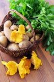 与新鲜的金黄黄蘑菇和potatos荷兰芹的篮子在选项 图库摄影