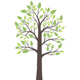 与新鲜的年轻叶子的风格化孤立树 库存照片