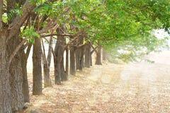 与新鲜的绿色叶子的大树 免版税库存图片