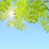 与新鲜的绿色叶子的您的文本的明信片和地方 库存照片