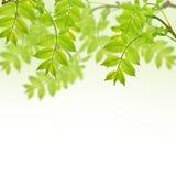 与新鲜的绿色叶子的您的文本的明信片和地方 免版税库存图片