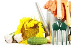与新鲜蔬菜和工具的从事园艺的静物画 库存照片
