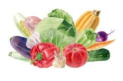 与新鲜蔬菜的手画水彩clipart 免版税图库摄影