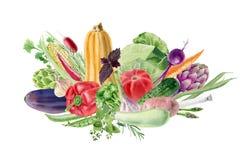 与新鲜蔬菜的手画水彩clipart 免版税库存照片