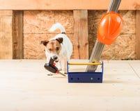 与无绳的钻子和司机的滑稽的建造者在建造场所 免版税图库摄影