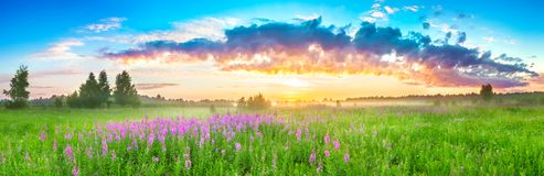 与日出和开花的草甸的全景农村风景 免版税图库摄影