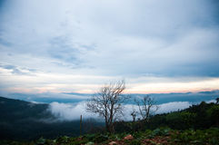 与日出的美丽的薄雾 免版税库存照片