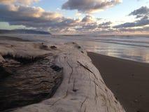 与日志和华美的日落的Kiwanda俄勒冈海滩 免版税库存照片