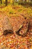 与日志的秋天风景 库存图片