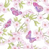 与日本开花佐仓和蝴蝶的无缝的样式 v 皇族释放例证