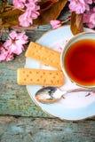 与日本樱桃树开花的美丽,葡萄酒茶杯和苏格兰脆饼,关闭 免版税库存照片