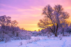与日落和森林的冬天风景 库存图片