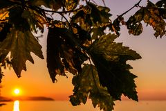 与日落和秋叶的浪漫背景 库存照片