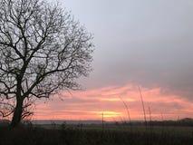 与日落日出的树 免版税库存图片
