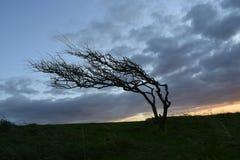 与日落的一棵美丽的树 库存照片