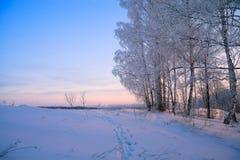 与日落的冬天农村风景在森林里 免版税库存图片