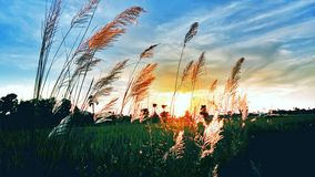 与日落的晚上 库存照片