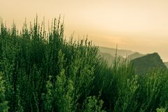 与日落的松弛热带山草在背景中 免版税库存照片