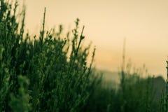与日落的松弛热带山草在背景中 库存照片