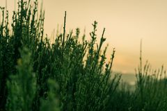 与日落的松弛热带山草在背景中 库存图片