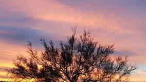 与日落的树上面 库存照片