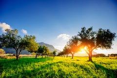 与日落的树阴影 免版税库存图片