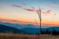 与日落的死亡树 免版税图库摄影