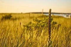 与日落的沙丘 免版税库存图片