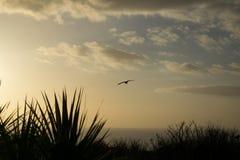 与日落的海鸥背景的 库存图片