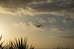 与日落的海鸥背景的 免版税库存照片
