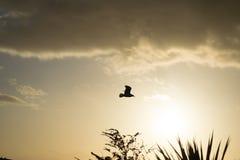 与日落的海鸥背景的 库存照片