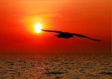 与日落的海鸥 免版税库存照片