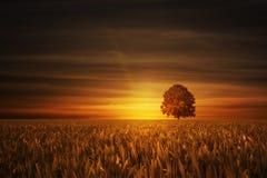与日落的结构树 免版税库存图片