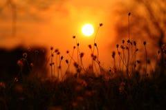 与日落的草花 库存图片